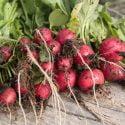 radishes header