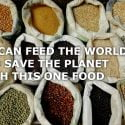 pulses can feed the world