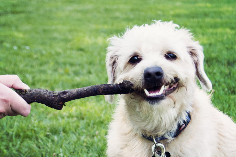 Human Foods Your Dog Cannot Eat
