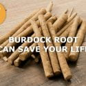 burdock root can save your life